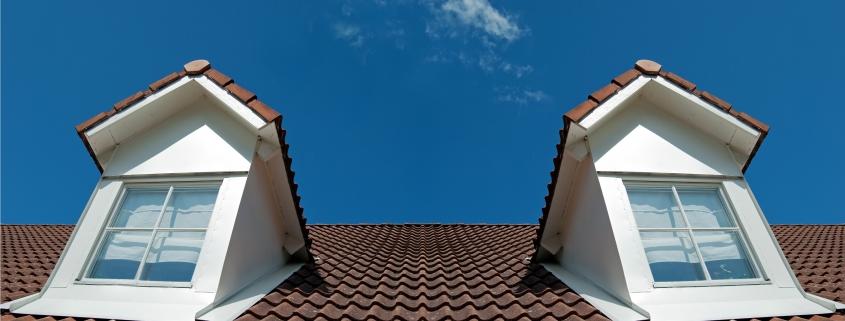 Chiens assis sur une toiture