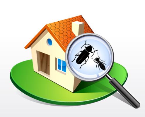Termites de bois : comment les traiter ?